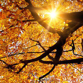 Sun shining in the golden autumn — Zdjęcie stockowe