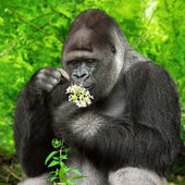 Gorilla observing a bunch of flowers — Stock Photo