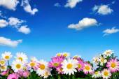 Flower bed and blue sky — Stock Photo