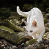 White cat in free nature — Stock Photo