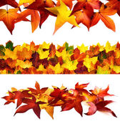 Set of 3 autumnal borders — Stock Photo