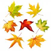 Set of colorful isolated autumn leaves — Stock Photo