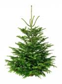 Perfect fir tree on pure white — Stock Photo