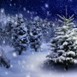 Fir tree in snowy night — Stock Photo #56988271