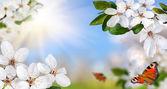 Springtime paradise — Stock Photo