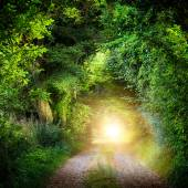 Tunnel of trees leading to light — Stock Photo