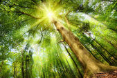 Magical mood with sunrays in a forest — ストック写真