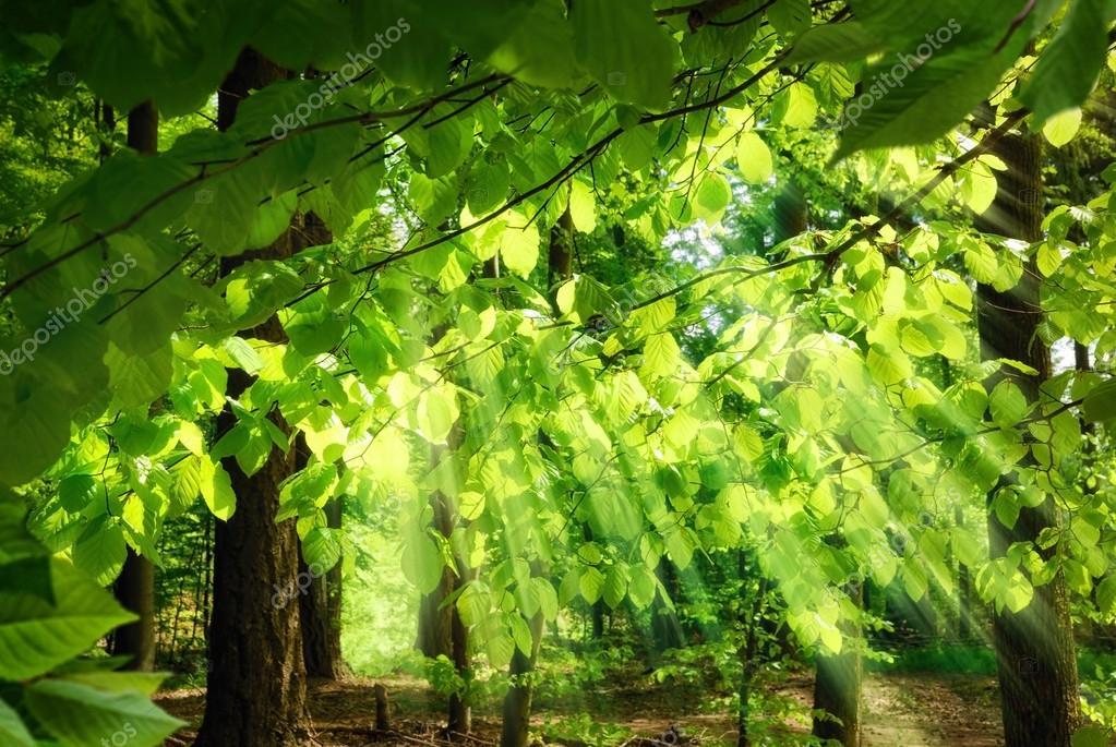 Фотообои Лучи солнечного света проходящего сквозь листву