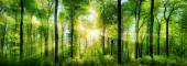 Forest panorama with rays of sunlight — Stock Photo