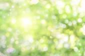 Beautiful defocused highlights in foliage — Stock Photo