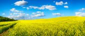 Vast field of blossoming rapeseed, panorama — Stock Photo