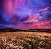 Colourful sunrise over blossoming meadows — Stock Photo