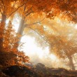 Trees in a scenic misty forest in autumn — Stock Photo #83361648