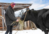 Rancher in casual  winter clothesin  stands  with cow — Stock Photo