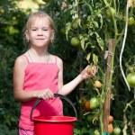 Vegetable garden — Stock Photo #60981157