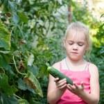 Vegetable garden — Stock Photo #60981177