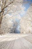 Camino de invierno en el bosque nevado — Foto de Stock