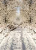 Winter road in snowy forest landscape — Foto de Stock