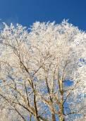 Boomtakken bedekt met sneeuw — Stockfoto