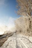 Winter road in snowy forest landscape — Stockfoto