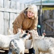 Woman takes care of the little goats — Stock Photo #67054983