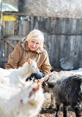 Elderly woman watching young goats — Stock Photo