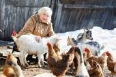 Woman cares little goats and chickens on  home farm — Stock Photo