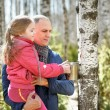 Family in wood collecting birch sap to steel mug — Stock Photo #70300921