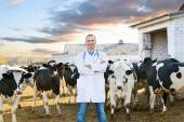 Veterinarian at  farm cattle — Stock Photo