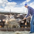 Male rancher in a farm  — Stock Photo #74898777