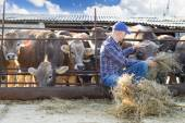 Male rancher in a farm — Stock Photo