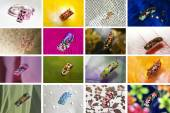Collection of designs. — Stock Photo