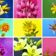 Floral collection. — Stock Photo