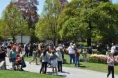 2014 Tulip Festival at Washington Park in Albany, New York State — Stock Photo