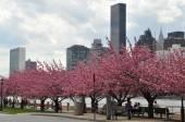Roosevelt Island promenade over the East River to Manhattan, New York — Stock Photo