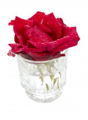 Beautifull red rose in a glass with water drops — Stock Photo