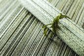Bambu halı — Stok fotoğraf
