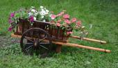 Waggon with flowers — Stock Photo