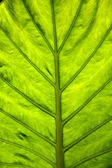 Sunny leaf — Stock Photo