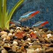 Little fishes in an aquarium — Stockfoto
