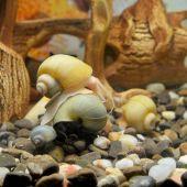 水族館で美しいカタツムリ — ストック写真