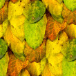 Seamless texture of autumn yellow leaves — Stock Photo #63589329