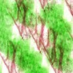 Art  watercolor green, purple ink paint blob watercolour splash — Stock Photo #63590261