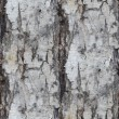Birch tree texture seamless background wallpaper — Stock Photo #65389615