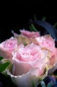 Delicate light-pink roses closeup on a black background — Stockfoto