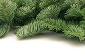 Fir-tree twigs — Stock Photo