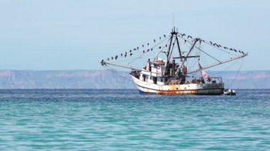 Old Fishing Boat With Many Seabirds — Stock Video