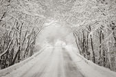 Snowy winter road in forest — Stock Photo