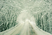 Snowy  road in winter forest — Stock Photo