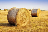 Haystacks in the field at sunny day — Stock Photo